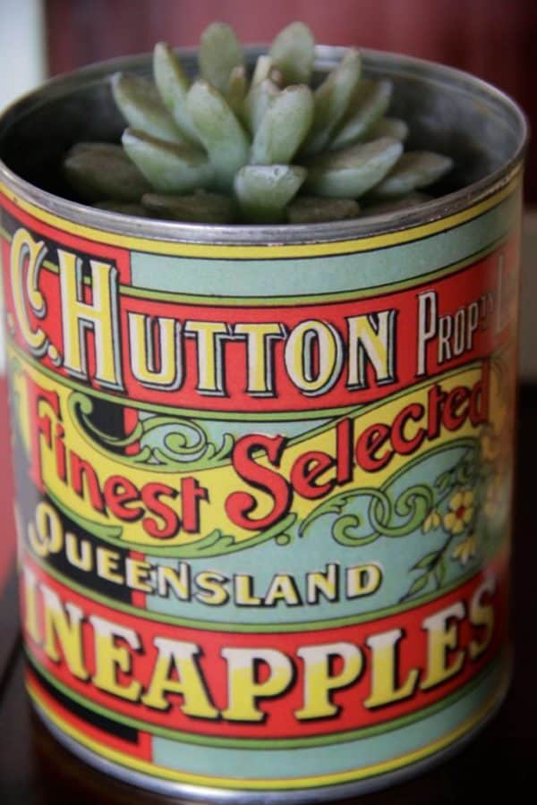 Hutton QLD Pineapples