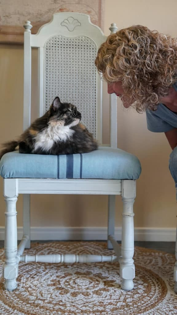 Mora chair with cat